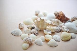 乾燥させた貝殻