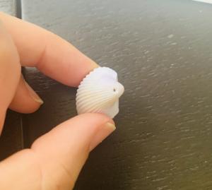 穴の開いた貝殻